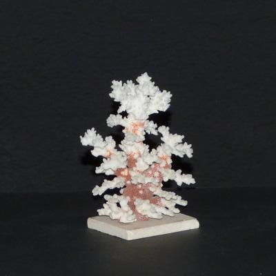 E17-4-1-coral-blanco-peana